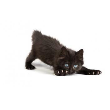 jouet petit chaton