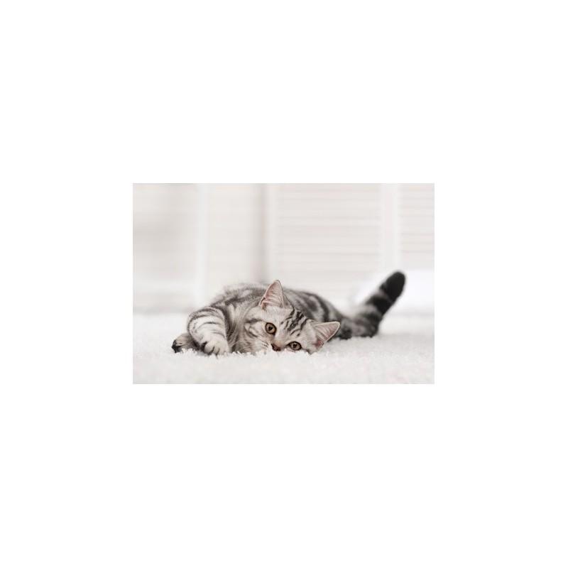 jouet chat chaton