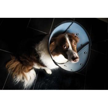 Collerette Pet Airs Taille M - Collerette pour chat et chien